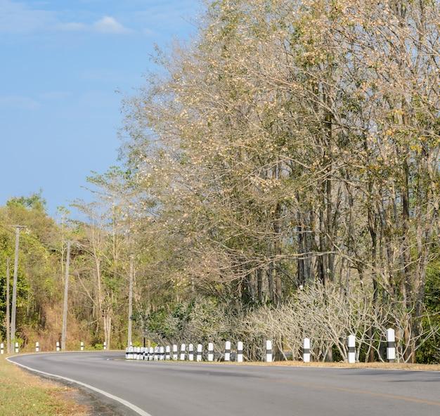 Asfalt kromme weg met bladverliezende boom