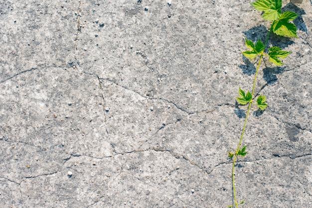 Asfaltachtergrond en takje met groene bladeren. kopieer ruimte