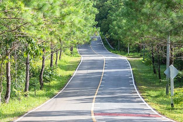 Asfaltweg die heuvelachtig en gebogen is met pijnbomen aan beide kanten van de weg.