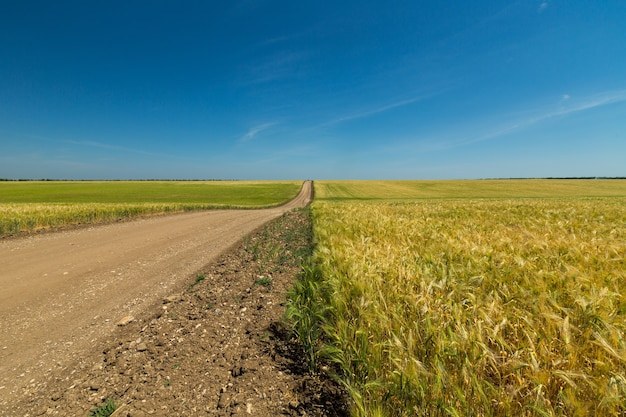 Asfaltweg door het groene veld en de wolken op de blauwe lucht in de zomerdag
