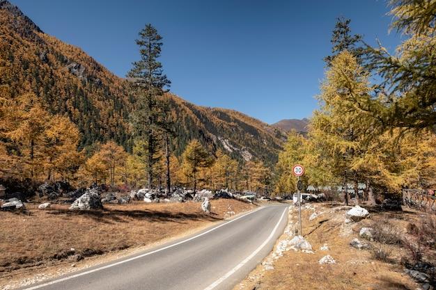 Asfaltweg in de vallei van de de herfstpijnboom bij het yading