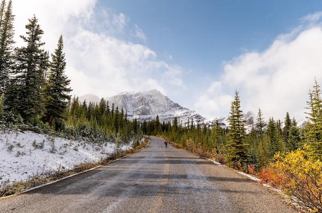 Asfaltweg met rotsachtige bergen en mist in dennenbos in banff national park