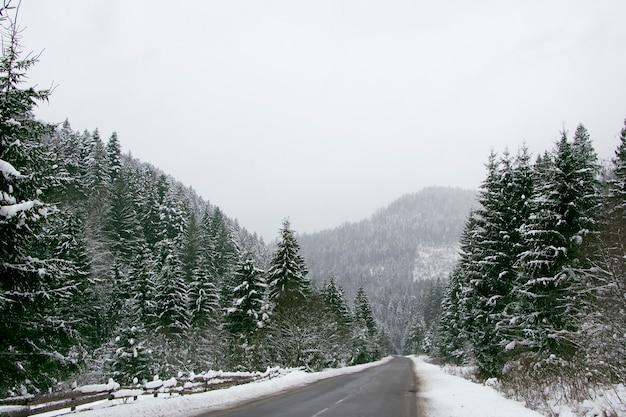 Asfaltweg tussen het met sneeuw bedekte bos