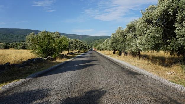 Asfaltweg tussen olijfbomen