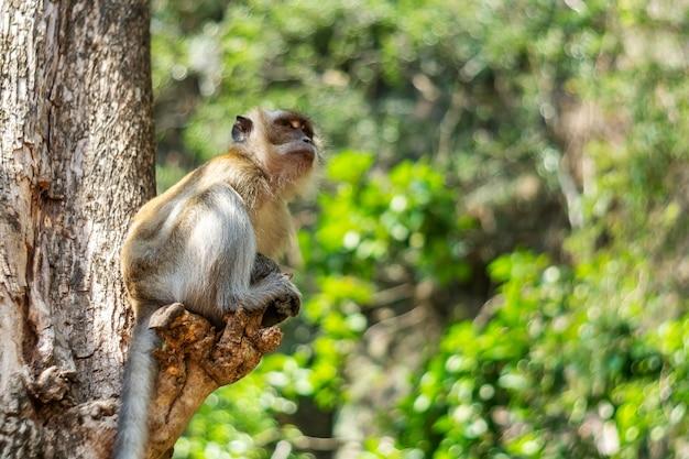 Asia monkey wildlife