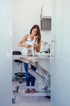 Assistent van een dierenarts die met een hond werkt