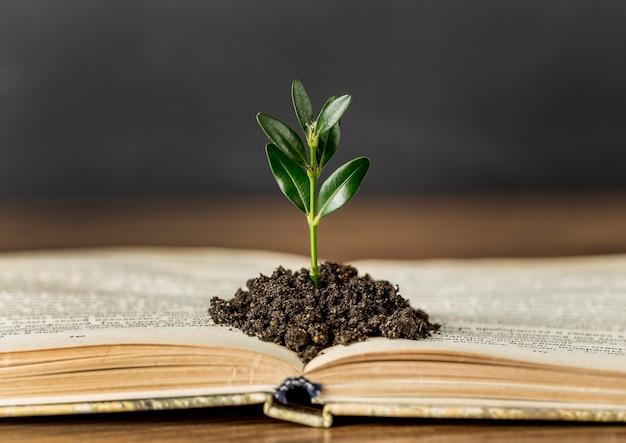 Assortiment met boek en plant in de grond