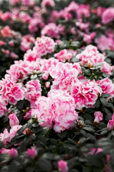 Assortiment met mooie roze bloemen