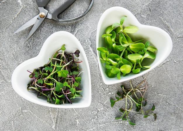 Assortiment van microgreens aan betonnen tafel, bovenaanzicht. gezonde levensstijl