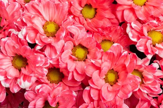 Assortiment van mooie bloemen achtergrond