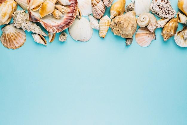 Assortiment van zeeschelpen
