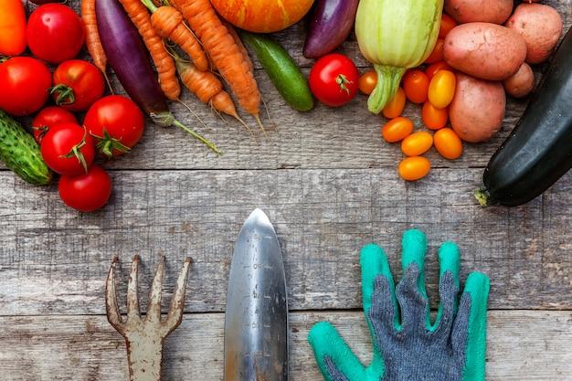Assortiment verschillende verse biologische groenten en tuingereedschap op landelijke stijl houten tafel. lokale tuin produceert schoon voedsel