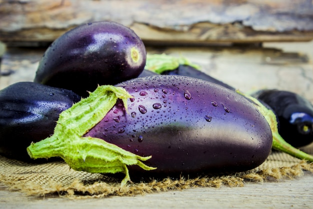 Aubergine. voedsel. selectieve aandacht. natuur tuin voedsel.