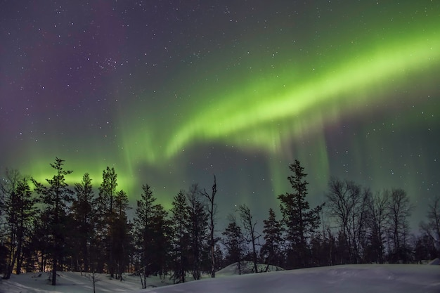 Aurora borealis over bladeren achter een besneeuwd bos