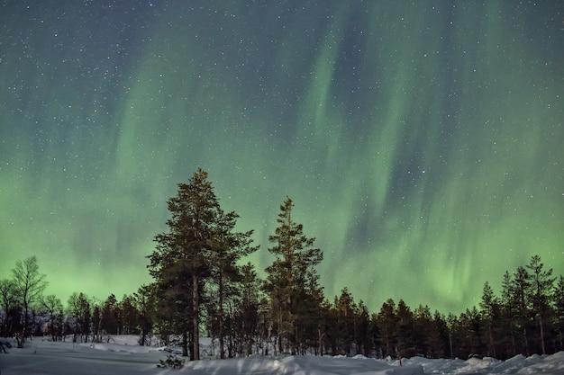 Aurora borealis over een besneeuwd bos