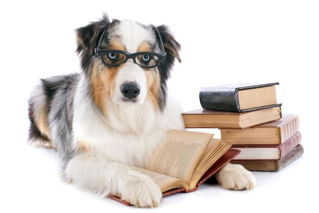 Australische herder en boeken