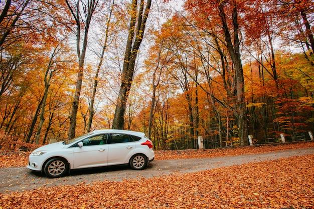 Auto op een bospad