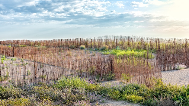 Autochtone planten omheind met riet voor herbebossing in natuurgebied