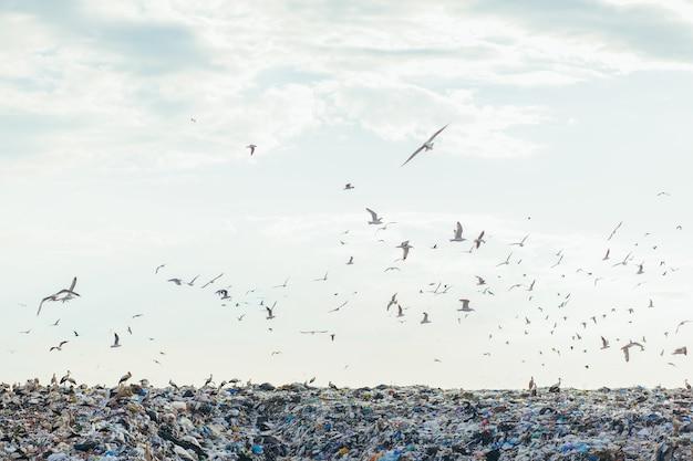 Autokerkhof van huishoudelijk afval op stortplaats