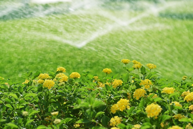 Automatisch irrigatiesysteem met gras en heg