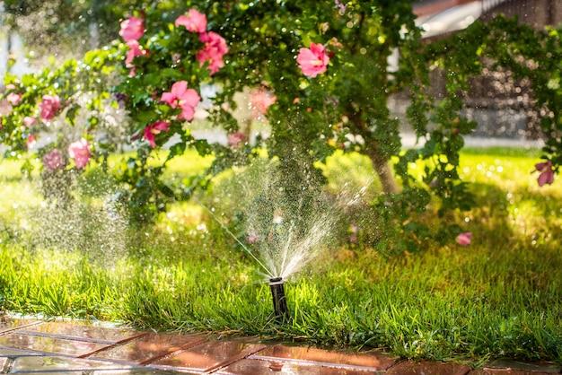 Automatische sproeiers voor het besproeien van gras. het gazon wordt in de zomer bewaterd. handig voor thuis. alcea rosea bloem in de ondergaande zon