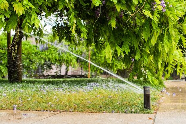 Automatische sproeiers voor het besproeien van gras. het gazon wordt in de zomer bewaterd. handig voor thuis. de blauweregenbloem valt eraf.
