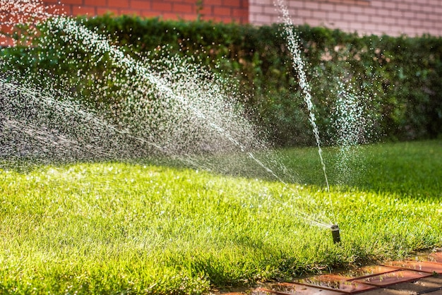 Automatische sproeiers voor het besproeien van gras. het gazon wordt in de zomer bewaterd. handig voor thuis. verse groenten