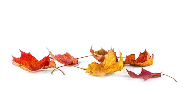 Autum banner met kleurrijke herfstbladeren vallen van tree.isolated op wit.