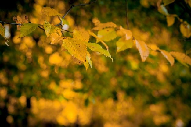 Autumm verlaten en wazig karakter. kleurrijk gebladerte in het park. vallende bladeren natuurlijke achtergrond. herfst seizoen