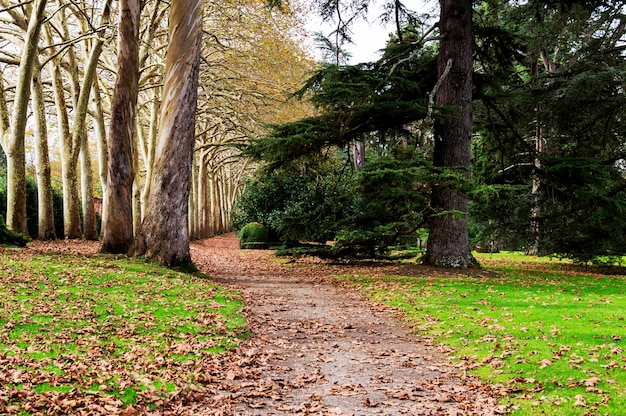 Autumn fall leaves in walkway park met bomen en groene struiken