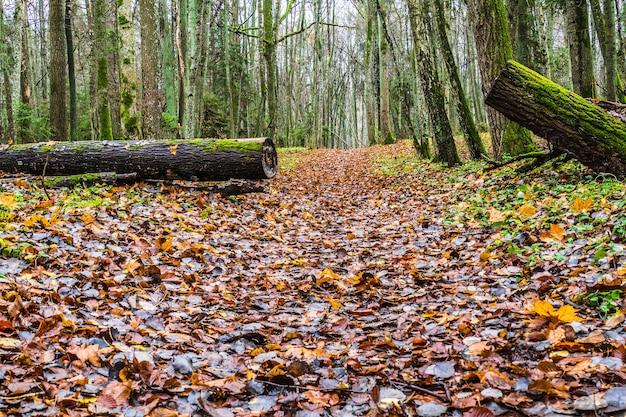 Autumn forest path walk trail in de natuur