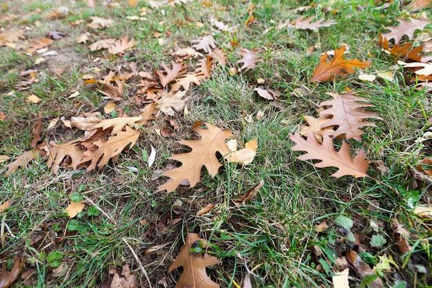 Autumn park, bewolkt - een park in de herfst, bij bewolkt weer, late herfst,