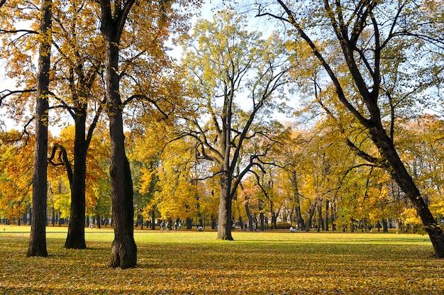 Autumn park met gele bladeren en gevallen bladeren en cheshire-eik