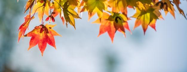 Autumn red maple leaves met copyspaceachtergrond.