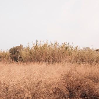 Autumunlandschap met een tarwegebied
