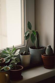 Avocado plant gekiemd avocado zaad