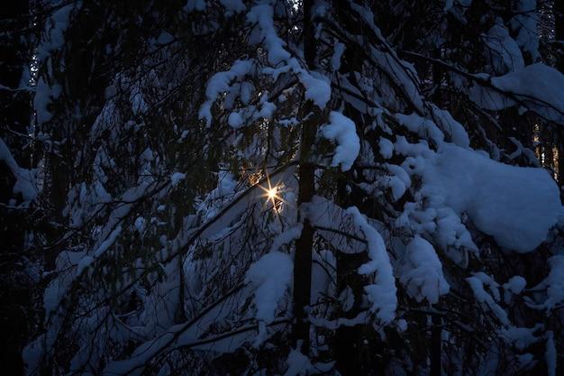 Avond in het donkere bos, kerstmis. zonnestralen in het donker