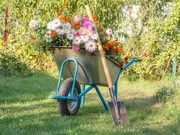 Avond na het werk in de zomertuin. kruiwagen met bloemen en spade op groen gras.