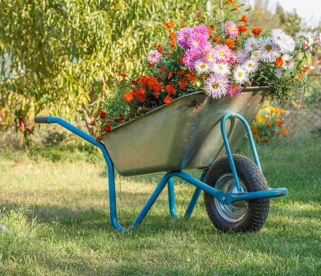 Avond na het werk in een zomertuin. kruiwagen met bloemen op groen gras op natuurlijke achtergrond.