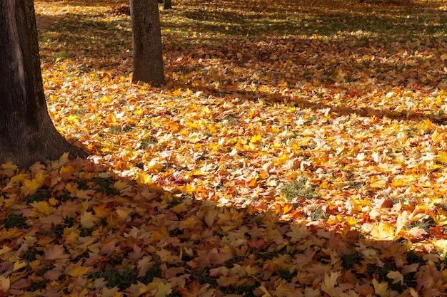 Avondtijd in het park, de schaduw van de boomstammen op de gevallen bladeren