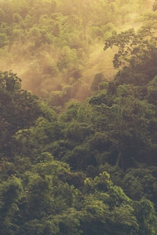 Aziatisch tropisch regenwoud, de achtergrond van de aardmening
