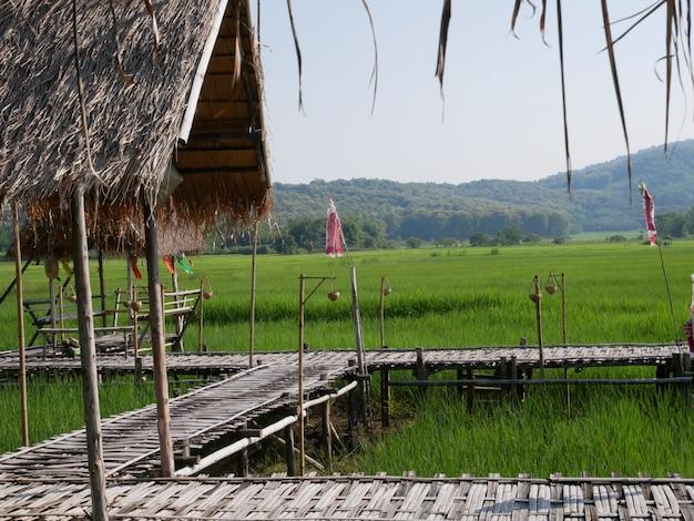 Aziatische aardachtergrond en groen rijstlandbouwbedrijf