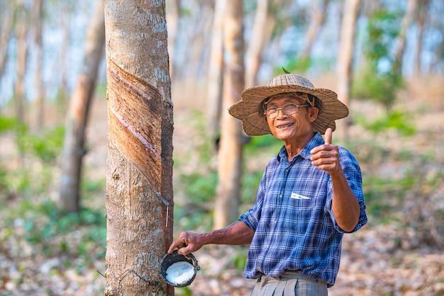 Aziatische boer met kopjes latex rubberboom in rubber plantage