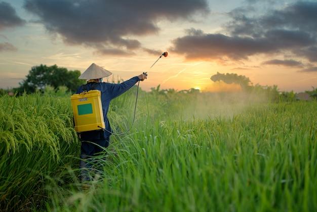 Aziatische boeren spuiten herbiciden op het veld