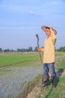 Aziatische boerenman draagt een geel shirt dat staat en gereedschap vasthoudt op een groene rijstboerderij.