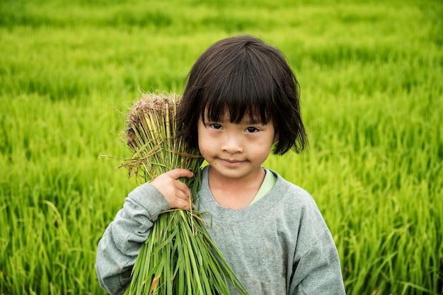 Aziatische die kinderenlandbouwer op padieveld, op padiegebied wordt gekweekt.
