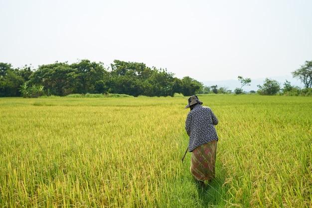 Aziatische famer die in padieveld loopt