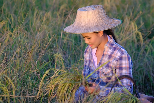 Aziatische gelukkige thaise vrouwelijke landbouwers oogstrijst in platteland thailand