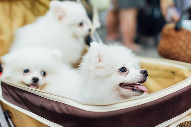 Aziatische hondeigenaar en de hond in huisdieren expo