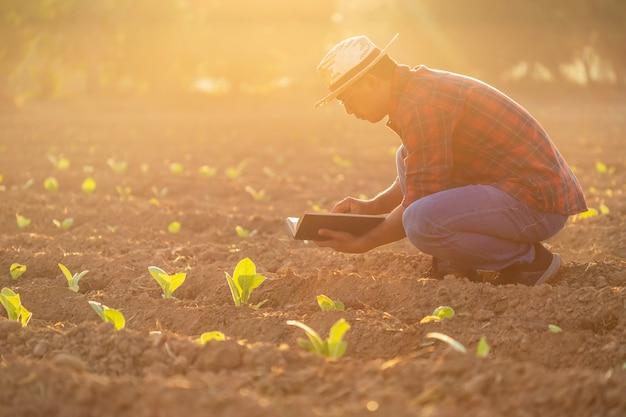 Aziatische jonge landbouwer die op het gebied van tabaksboom werkt